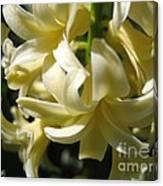 Hyacinth Named City Of Haarlem Canvas Print