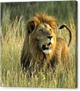 King Of The Savanna Canvas Print