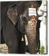 Lakshmi Temple Elephant Canvas Print