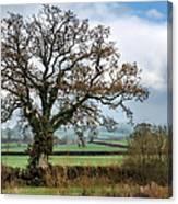 Lower Bruckland - Devon Canvas Print