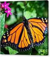 Monarch Danaus Plexippus Canvas Print