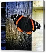 Phoenician Butterfly Canvas Print