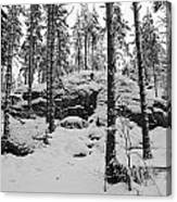 Pine Forest Winter Canvas Print