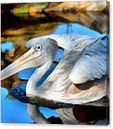 Pink Backed Pelican Canvas Print