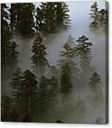 Redwood Creek Overlook With Giant Redwoods Sticking Out Above Lo Canvas Print
