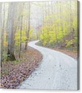 Road Passing Through A Forest Canvas Print