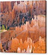 Sandstone Hoodoos In Bryce Canyon  Canvas Print