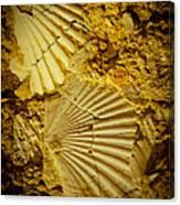 Seashell In Stone Canvas Print