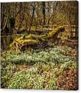 Snowdrop Woods Canvas Print