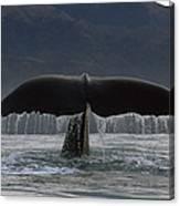 Sperm Whale Tail New Zealand Canvas Print