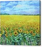 Sunflower Field Under Blue Skies Canvas Print