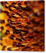 Sunflower From The Color Fashion Mix Canvas Print