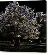 Tree With Large White Flowers Canvas Print