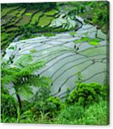 Unesco World Heritage Site, Rice Canvas Print