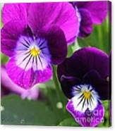 Viola Named Sorbet Plum Velvet Jump-up Canvas Print