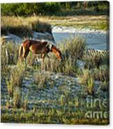 Wild Spanish Mustang Canvas Print