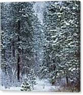 Winter In Pike National Forest Canvas Print
