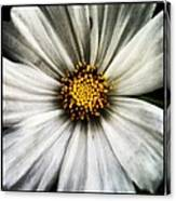 50 Shades Of Flower Canvas Print