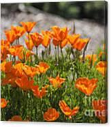 547 Cf Orange Green And Gray Canvas Print