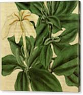 Botanical Print By Sir William Jackson Hooker Canvas Print