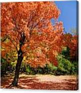 A Blanket Of Fall Colors Canvas Print