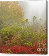 Autumn Fog Dolly Sods Canvas Print