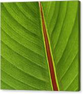 Banana Leaf Canvas Print