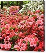 Callaway Gardens Canvas Print