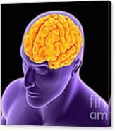 Conceptual Image Of Human Brain Canvas Print