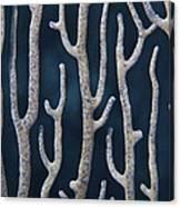 Coral Design Canvas Print