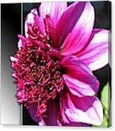 Dahlia Named Blue Bayou Canvas Print