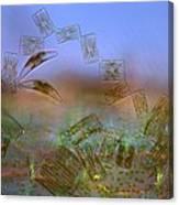 Diatoms, Light Micrograph Canvas Print