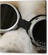 Dog With Sunglasses Canvas Print