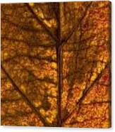 Dogwood Leaf Backlit Canvas Print