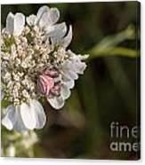 Flower Crab Spider Canvas Print