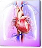 Human Heart And Lungs Canvas Print