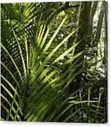 Jungle Light Canvas Print