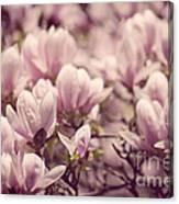 Magnolia Flowers Canvas Print