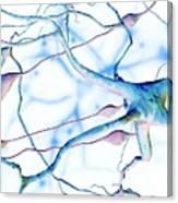 Nerve Cells Canvas Print