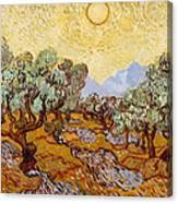 Olive Trees Canvas Print