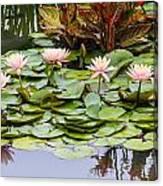6 Pink Waterlilies Canvas Print