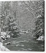 Snow Covered Pine Trees On The Side Of A River In The Winter. Canvas Print