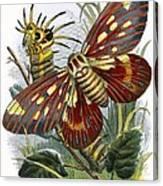 The Butterfly Vivarium Canvas Print