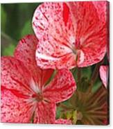 Zonal Geranium Named Mosaic Red Canvas Print