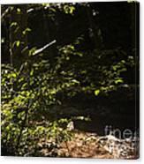 654 Cf Solitary Stream  Canvas Print
