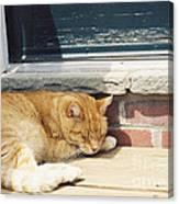 #665 03 Catnap  Canvas Print