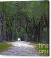 Allee Of Live Oak Tree's Canvas Print