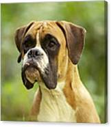 Boxer Dog Canvas Print