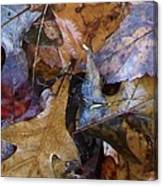 Colors Of The Fall Canvas Print