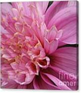 Dahlia Named Siemen Doorenbosch Canvas Print